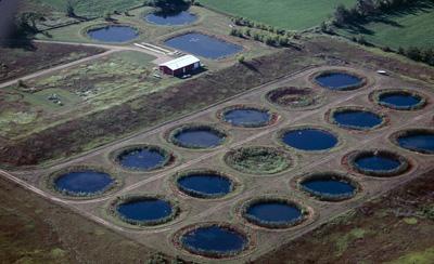 Experimental ponds